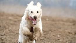 Уделала двуногих: собака случайно выиграла соревнования побегу вСША— видео