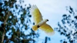 Нашествие какаду: тысячи попугаев атаковали австралийский город
