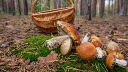 ВГосдуме отреагировали наидею ужесточения правил сбора грибов для граждан