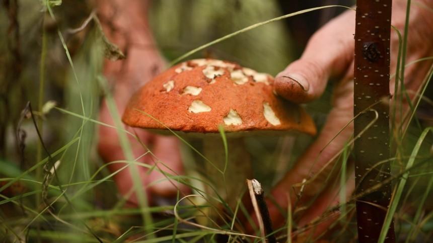 ВМинприроды разъяснили новые правила сбора ипродажи грибов
