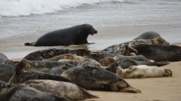 Мировая катастрофа: более 150 мертвых редких тюленей нашли напобережье Каспия
