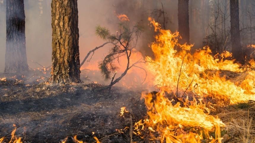 «Сарай, шпалы, скотина— все сгорело»— природные пожары бушуют врегионах РФ