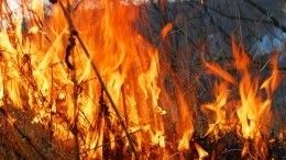 Огненная блокада: Тюмень оказалась вплену масштабных природных пожаров