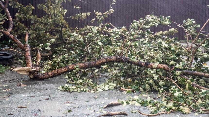 ВВологде ликвидируют последствия разрушительного урагана