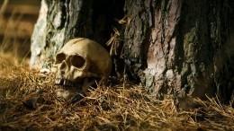 Только кости иштаны: человеческий скелет обнаружили влесу под Петербургом