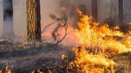 Вожидании дождя: вРоссии полыхают леса идеревни из-за аномальной жары