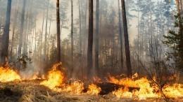 Лесной пожар добрался добазы отдыха под Тюменью