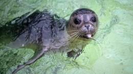Море пахнет спиртом: почему напобережье Каспия десятками находят мертвых тюленей?