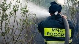 Начавшиеся дожди непомогают справиться слесными пожарами вРоссии