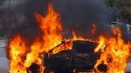 Видео: легковушка сбила лося под Рязанью, вспыхнула исгорела дотла