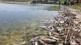 Молочные реки, кисельные берега: пищевые отходы отравили озеро вНижегородской области
