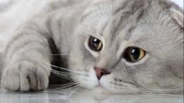 «Делать мир белее ипушистее»— вПетербурге выбирают лучших котов