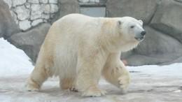Истощенную белую медведицу самолетом ВКС переправили изЯкутии вМоскву— видео