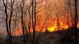 Площадь лесных пожаров вЮгре увеличилась всемь раз