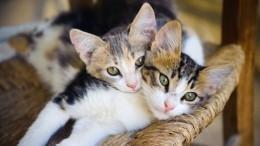 Говорят, неповезет: как окрас кошек влияет насудьбу иххозяев?