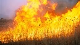 ВБашкирии крупный природный пожар охватил 140 гектаров леса