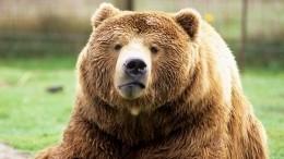 Видео: медведи устроили погром назаправке и«спа-вечеринку» вкоттедже
