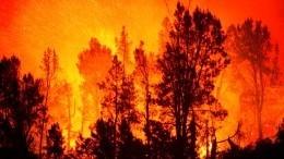 ВЯкутии лесной пожар практически подобрался кнефтебазе