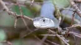 Змея нападает налюдей водворе навостоке Москвы. Выехали специалисты