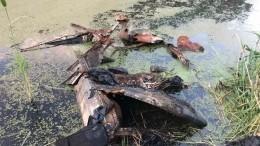 Автомобиль соскелетом всалоне обнаружили впруду вТюмени— видео