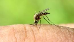 Ждатьли вэтом году нашествия комаров вРоссии?