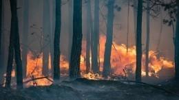 Пламя взяло вкольцо: спасатели едва непогибли при тушении природного пожара под Тюменью