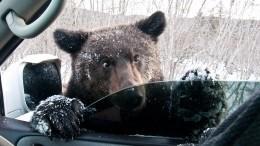 Ничего необычного, просто Россия. Впервый день лета медведь наСахалине катался сгорки