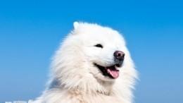 Видео: российский ледокол спас собаку вольдах Карского моря