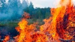 Вполтора раза увеличились лесные пожары врегионах РФ