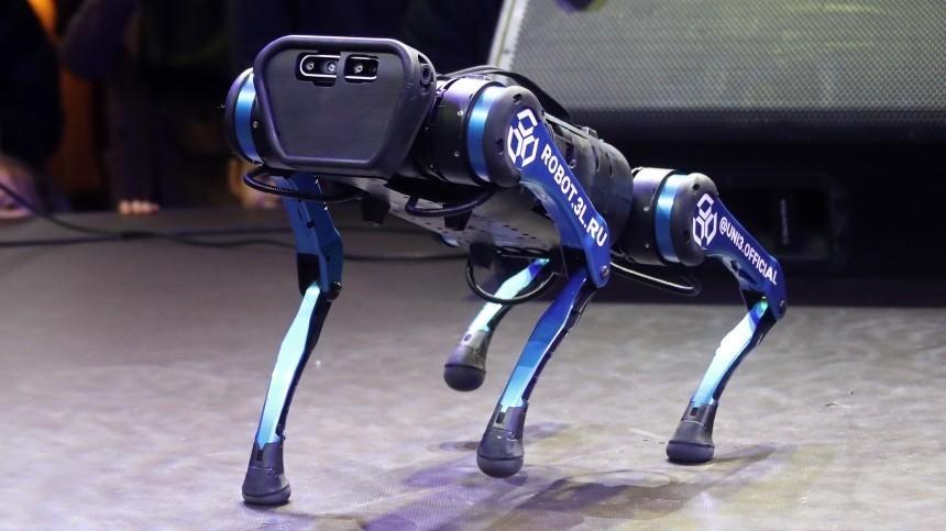 «Робо Бобик» напрогулке: как прошла встреча робопса иреальных собак