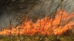 Площадь лесных пожаров вРоссии продолжает увеличиваться