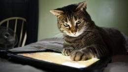 ВПетербурге подвели итоги переписи населения среди котов