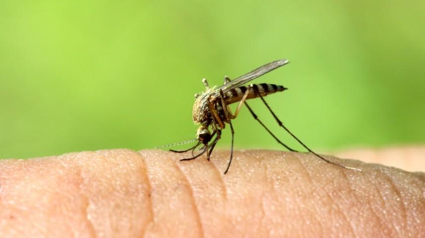 Переносят энцефалит илихорадку: каких комаров стоит опасаться россиянам?