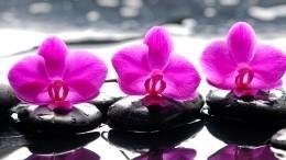 Какие растения притягивают вжизнь любовь, счастье издоровье?