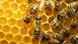 Пчеловоды Башкирии пожаловались намассовую гибель пчел