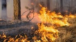 Минприроды заявило озанижении Якутией иПриангарьем данных олесных пожарах