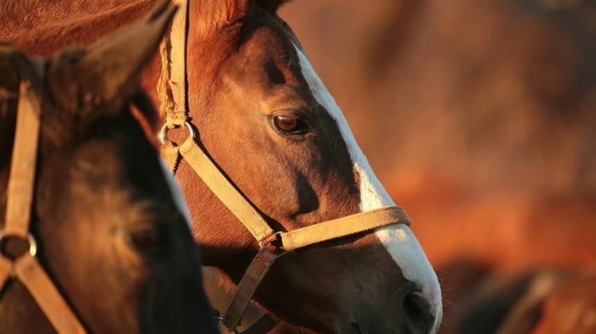 Лошадь врезалась втолпу участников празднования Сабантуя вТатарстане— видео