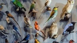 Павлин, колибри или пингвин: Какие птицы соответствуют разным знакам зодиака?