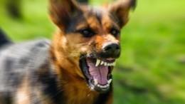 Стая разъяренных бродячих собак напала надетей вВолгограде— шокирующие кадры