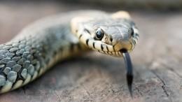 Бояться нечего? Эксперт прокомментировал нашествие змей наАзовском море