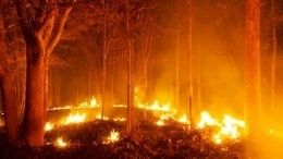 Пожар внацпарке «Бикин» угрожает амурским тиграм