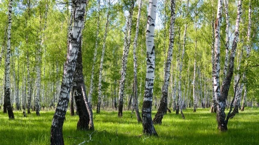 Как депутаты Госдумы намерены сохранить лес новыми законопроектами?