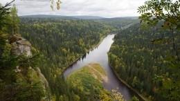 Общественник рассказал опреимуществах единой системы учета леса
