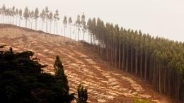 Эколог описал механизм работы единой системы учета леса вРоссии