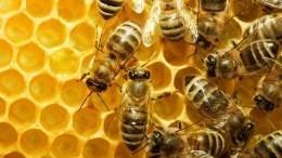Городское пчеловодство: можноли ставить ульи набалконе?