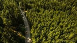 Паспорт для Буратино: вРоссии началась глобальная цифровизация леса