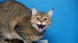 Ты— мой раб: ТОП-5 признаков ненависти кошки кчеловеку