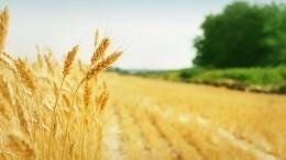 Российским фермерам разрешат торговать прямо споля