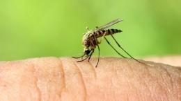 Постураганные кровопийцы: Крым атаковали полчища комаров