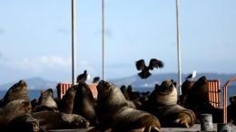 Дерзкие морские Львы «захватили» портовый город вАргентине
